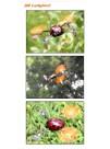 «Букашка» на радиоуправлении QR Ladybird